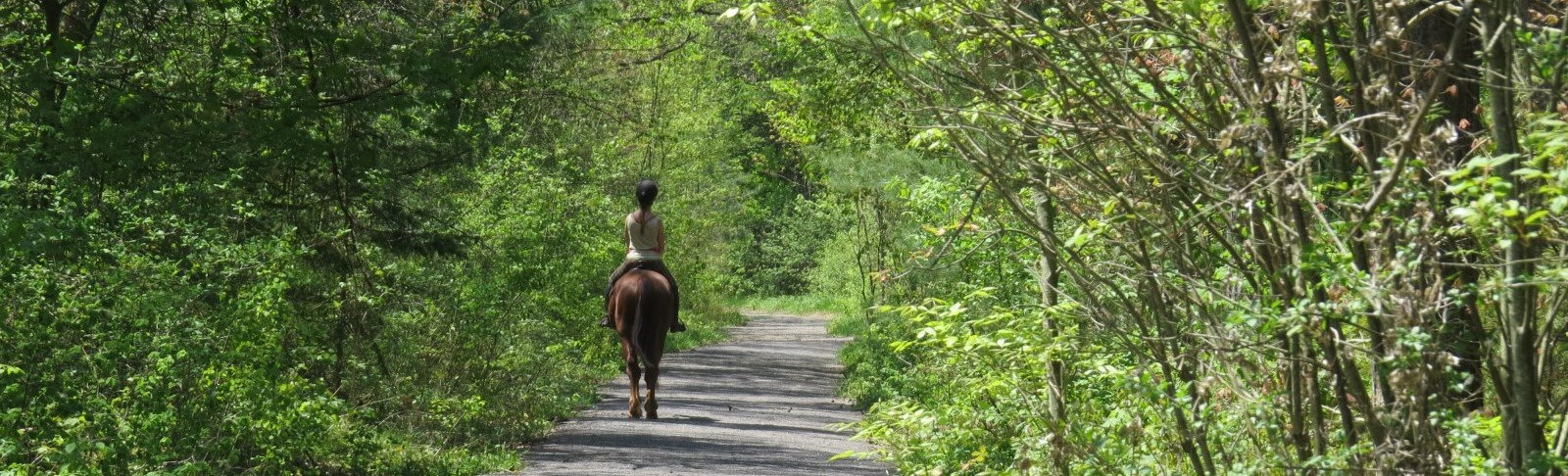 Horseback riding on forest trails