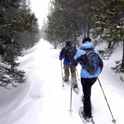 people cross-country skiing on a trail