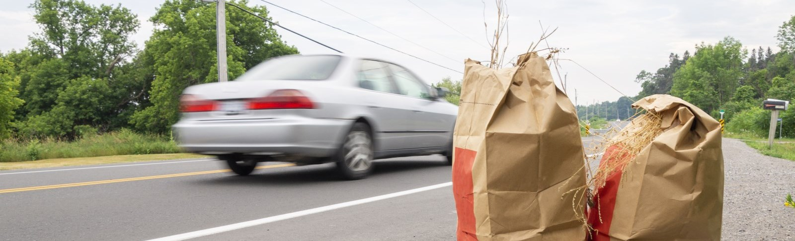 Leaf and yard waste bags set out at the road