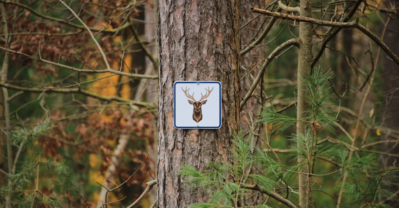 Trail sign on tree in County Forest